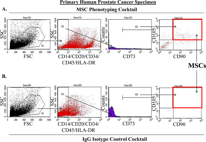 Method for Quantifying MSCs in Primary Human Prostatectomy Samples.