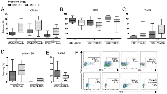 Differences in frequencies of T cell subsets comparing patients based on prostate size.