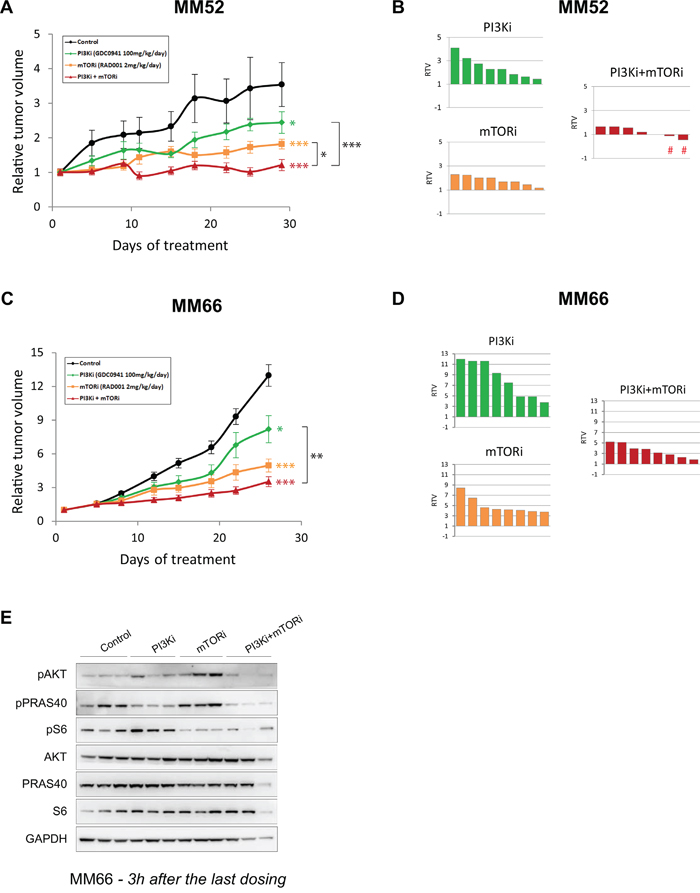 In vivo activity of PI3K and mTOR inhibitor combination in PDX models.