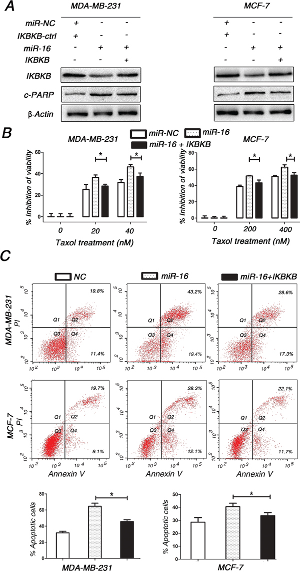 Restoring the expression of IKBKB recovers Taxol resistance and counteracts miR-16-mediated Taxol sensitivity.
