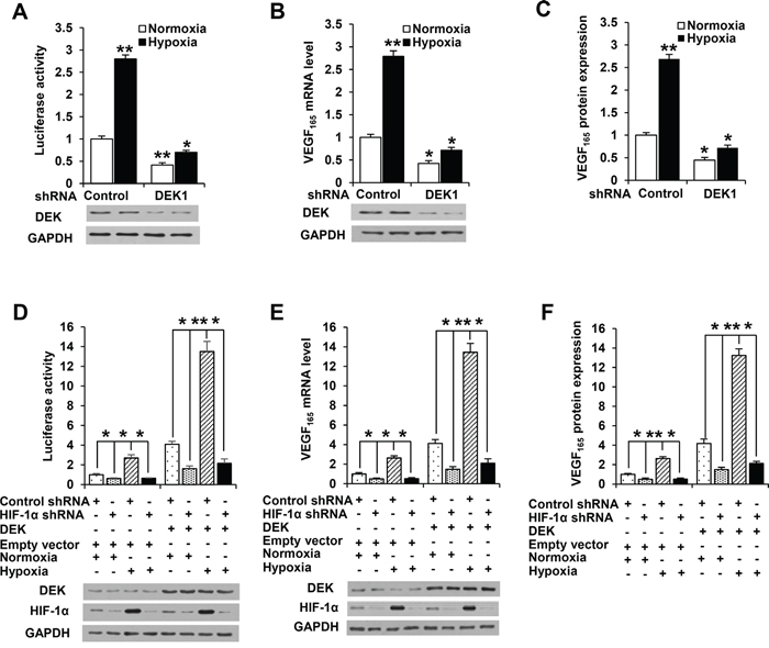 DEK controls VEGF expression in HIF-1α-dependent and -independent manners.