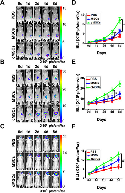 cMSCs promoted tumor growth in vivo to a greater extent than untreated-MSCs.