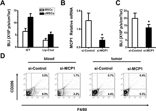 Tumor-promoting effect of the cMSCs relied on the MCP1 to recruit TAMs.