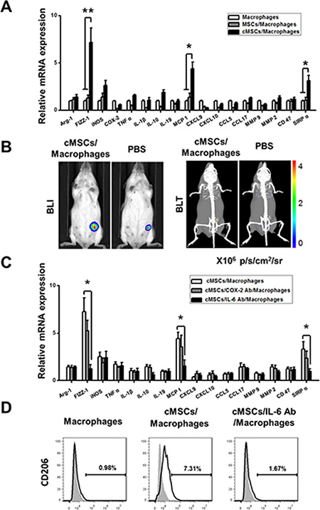 The cMSCs promoted the polarization of TAMs into M2-like cells through IL-6.