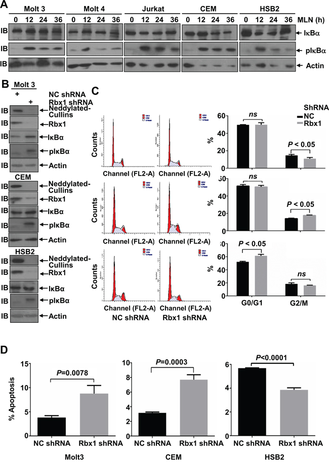Cullins only partially mediate the effects of MLN4924 in T-ALL cells.