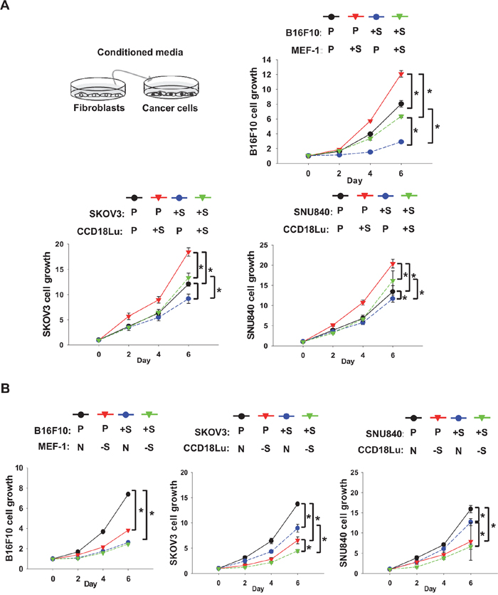 Role of fibroblast SIRT1 in cancer cell proliferation.