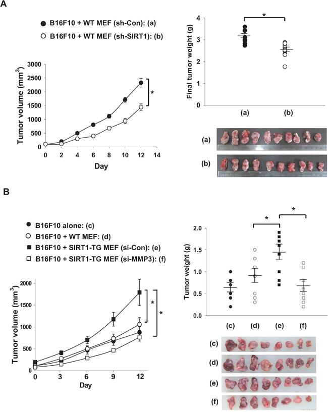 Fibroblast-derived MMP3 promotes tumor growth.