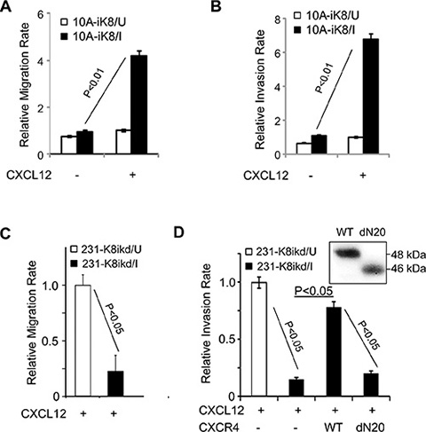 KLF8 promotes cell migration and invasion towards CXCL12.