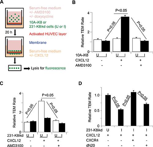 KLF8 promotes CXCR4-dependent TEM towards CXCL12.