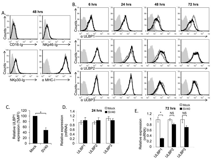 The stress-induced ligand ULBP1 is reduced following SV40 infection.