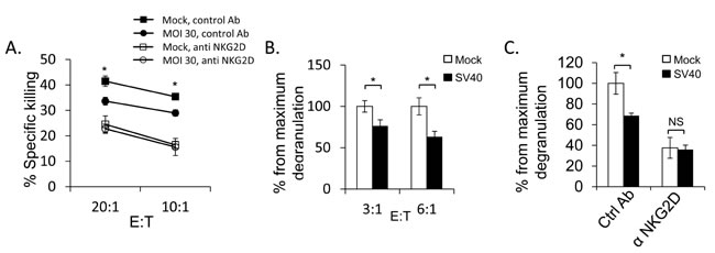 SV40 infected MCF7 cells are less susceptible to NKG2D mediated killing.