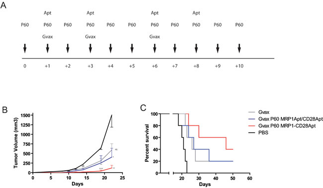 Tumor inhibition by CD28-MRP1 bi-specific aptamer in combination with GVAX and transient Foxp3 blockade.