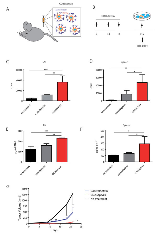CD28Aptvax elicits cellular antitumor immunity.