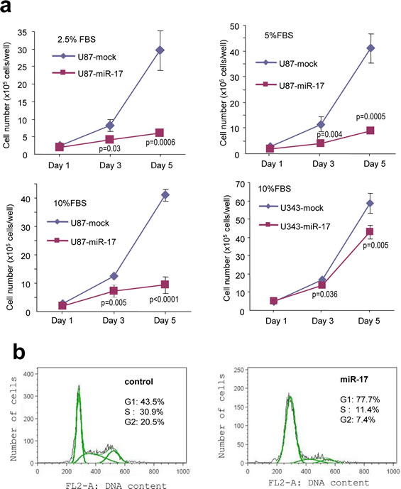 Expression of miR-17 reduces glioblastoma cell proliferation.