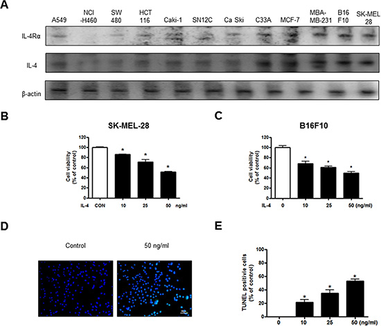 Effect of IL-4 on cancer cell growth and apoptotic cell death.