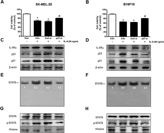 Reversed effect of p21 siRNA on IL-4-induced cell growth inhibition and STAT6 activation.