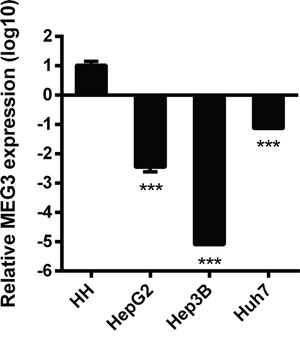 The base relative expression level of MEG3.