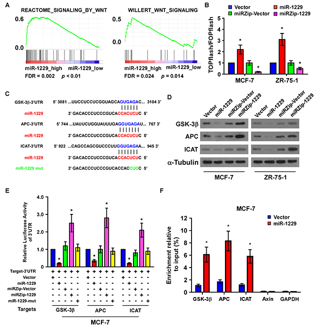 MiR-1229 activates the Wnt/β-catenin signaling pathway by targeting GSK-3β, APC, and ICAT.