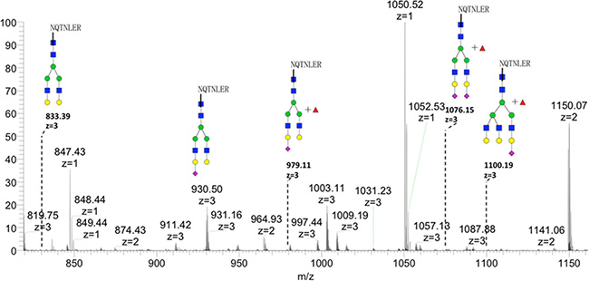 Glycan spectrum of Asn144 on recombinant GP73 by LC-MS.