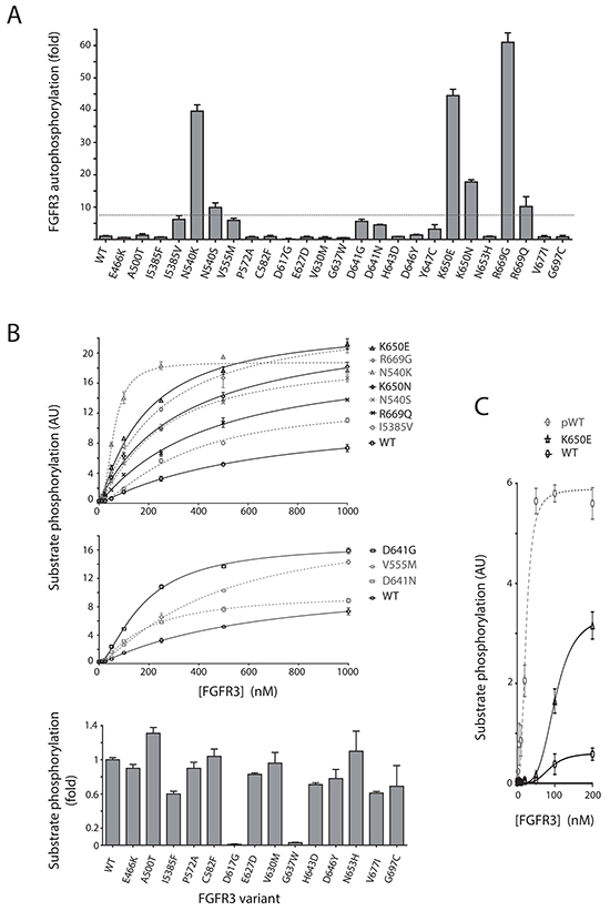 Kinase activity of selected FGFR3 variants harboring point mutations.