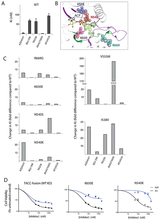 Inhibitor efficacy for a subset of FGFR3 variants measured in vitro and in cells.