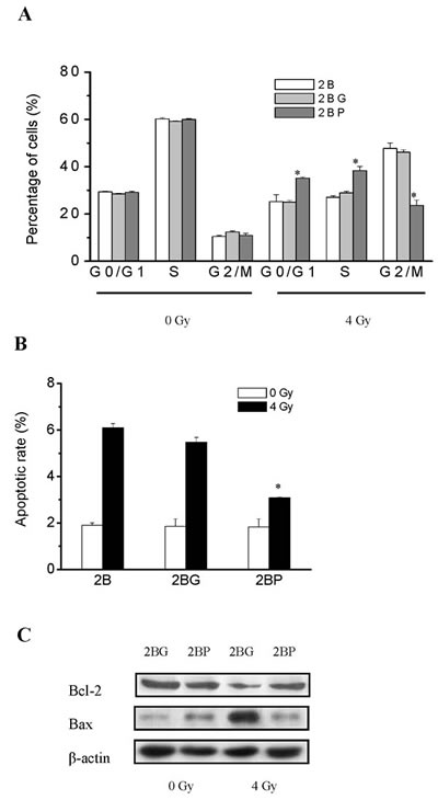 PprI expression alleviated radiation induced G2/M arrest and apoptosis in BEAS-2B cells.