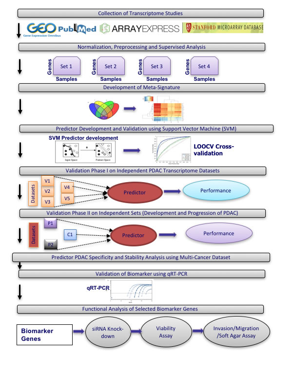 Overview of meta-analysis approach for development and validation of PDAC biomarker biomarker panel.