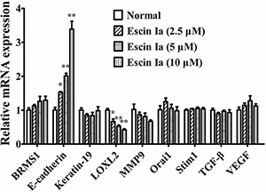 Effect of escin Ia on invasion-related factors in MDA-MB-231 cells.