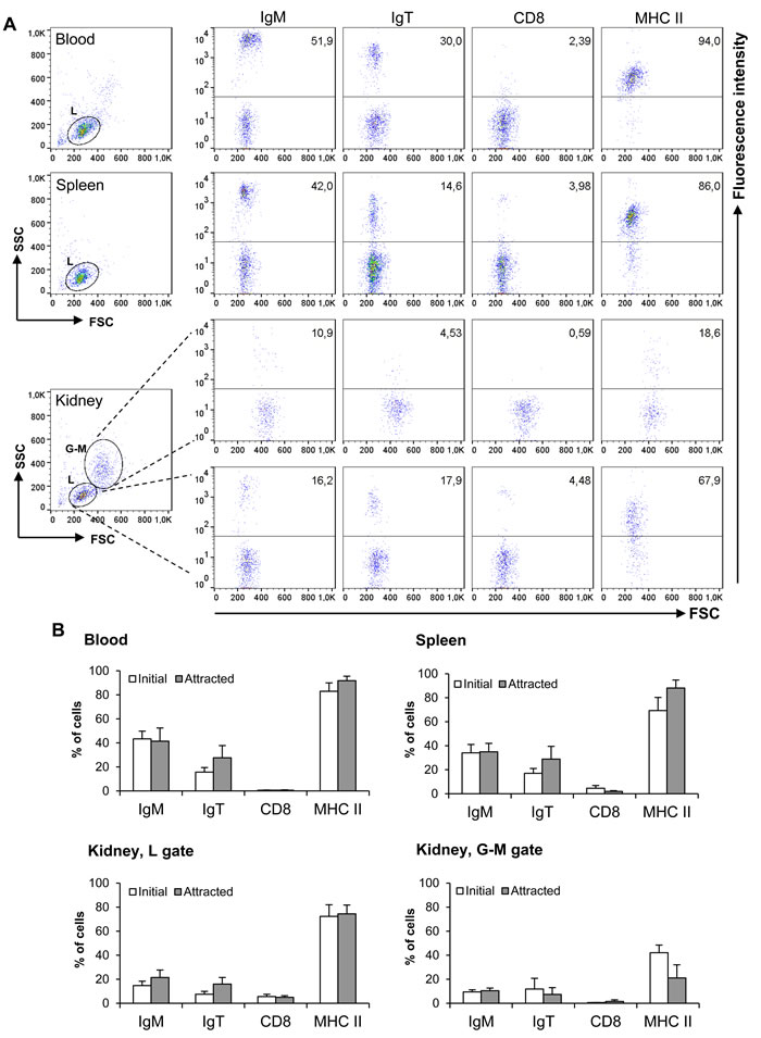 Characterization of leukocyte populations attracted to CK9.