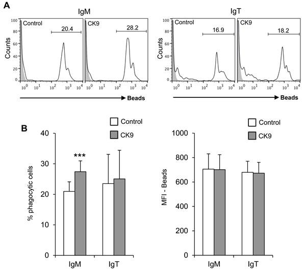 Effect of CK9 on the phagocytic capacity of B lymphocytes.