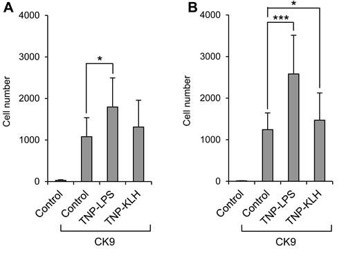 Effect of B lymphocyte stimulation on the migratory capacity of leukocytes towards CK9.