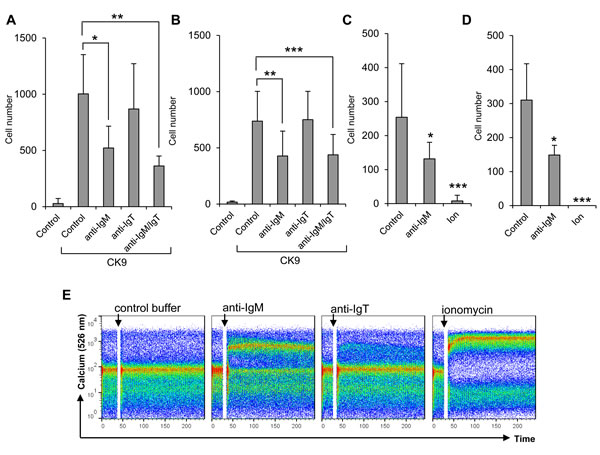 Effect of BCR cross-linking on the migratory capacity of leukocytes towards CK9.