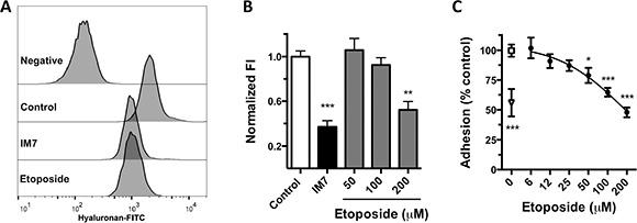 Inhibition of HA-CD44 binding by etoposide.