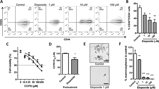 Effects of etoposide on stem-like properties of MDA-MB-231 breast cancer cells.
