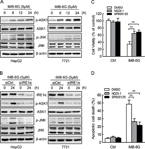 IMB-6G induces ASK1-JNK1 activation in HCC cells.