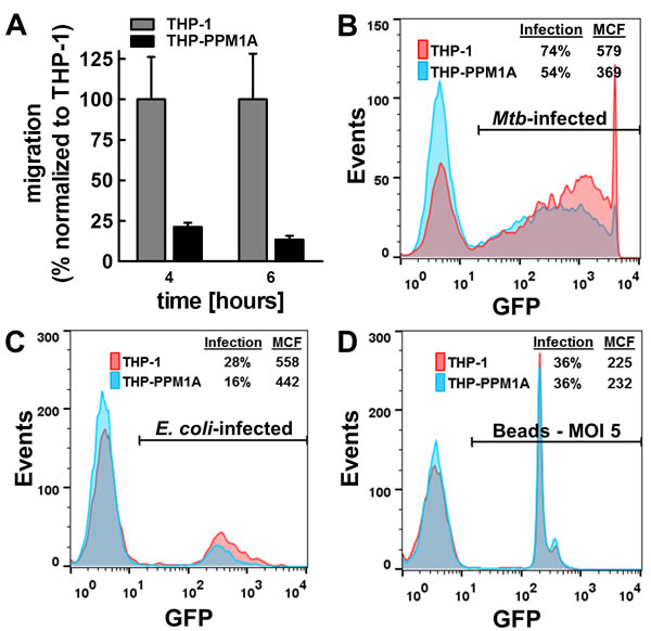 Elevated PPM1A levels impair macrophage functions.