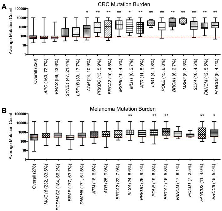 Somatic mutational burden in tumors with DNA repair gene mutations.