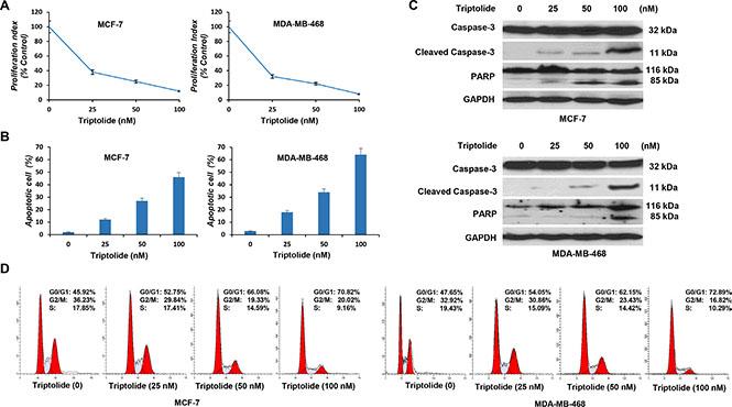 In vitro anticancer activities of triptolide.
