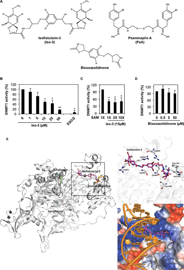 Iso-3 is a new DNMT1 inhibitor interacting with the DNA binding site of DNMT1.