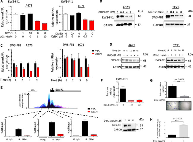 JQ1(+) treatment in Ewing Sarcoma cells induces a dose- and a time-dependent EWS-Fli1 down-regulation.