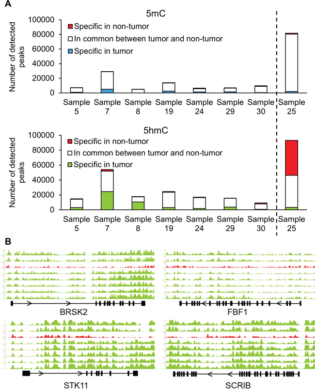 (h)MeDIP-Seq demonstrates changes in hydroxymethylation of cell polarity genes.