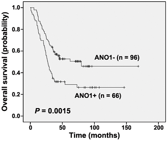 Kaplan-Meier analysis according to ANO1 status in cases from the first cohort (Log-rank test).