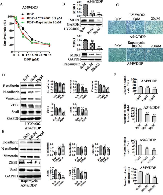 PI3K/AKT/mTOR pathway is involved in miR-206/MET regulated cisplatin resistance, EMT, migration and invasion.