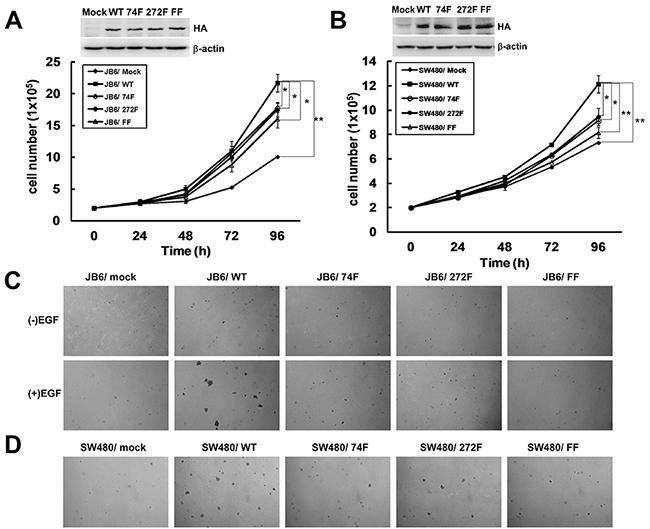 The phosphorylation of TOPK at Y74 and Y272 by Src promotes carcinogenesis ex vivo.