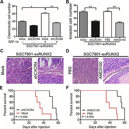 CXCR4 mediates RUNX2-promoted invasiveness and metastasis of GC cells.