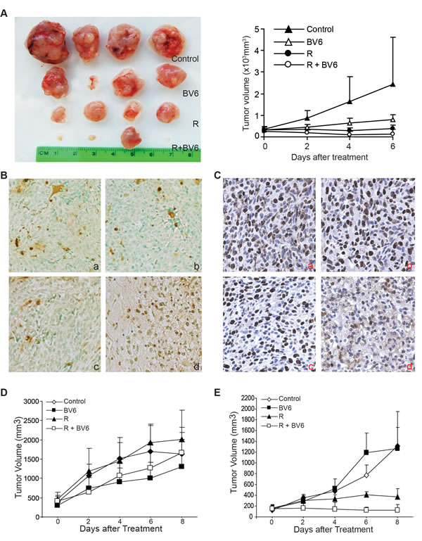 BV6 enhances radiation-mediated tumor growth suppression