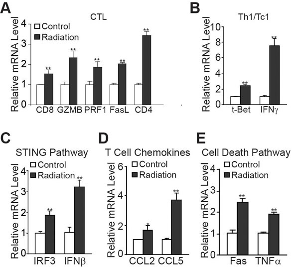 Radiation induces T cell immune responses in the tumor microenvironment.