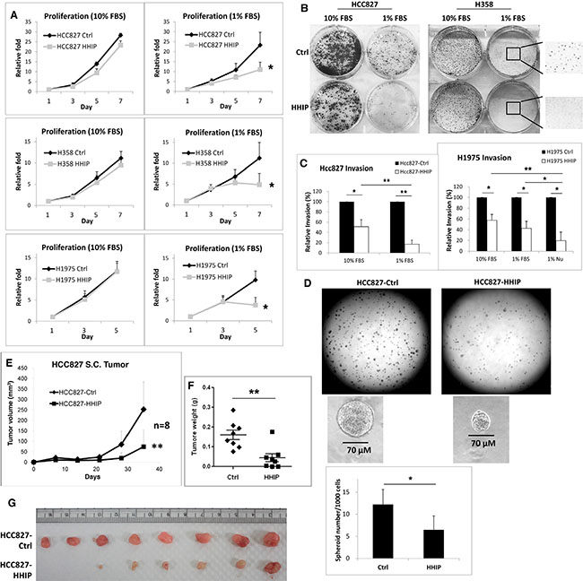 HHIP overexpression significantly inhibited cell proliferation, clonogenicity, invasion, and tumor spheroid formation in serum-starvation state.