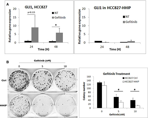 HH pathway was induced in LAC cells when treated with EGFR-TKI, while HHIP blocked such induction and further sensitized cells to EGFR-TKI treatment.