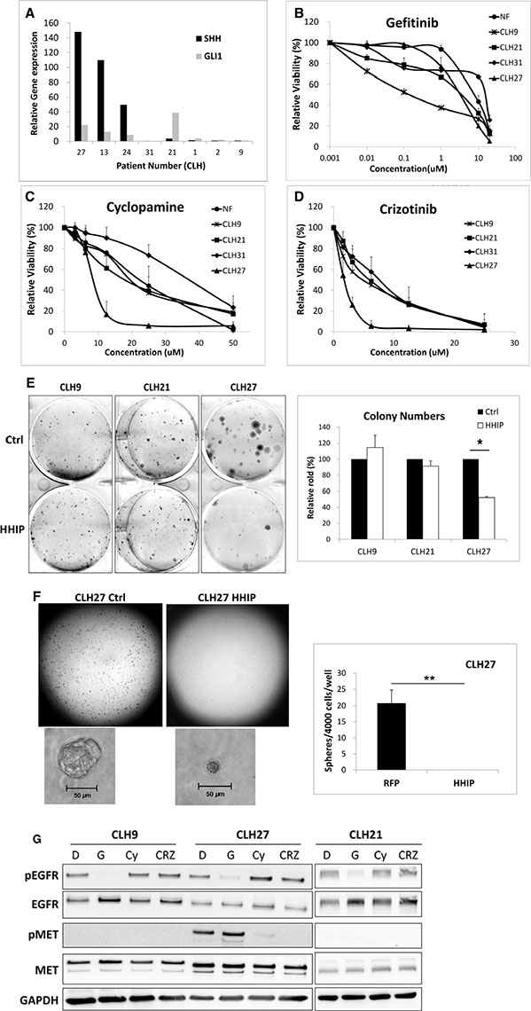 HH pathway maintained cell survival and growth in LAC cells with acquired resistance to EGFR-TKI through HGF/MET.